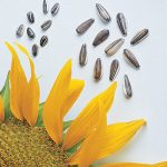 Sunflower Super Snack Mix Hybrid