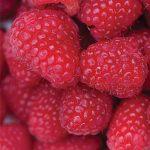 Raspberry Killarney