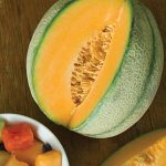 Cantaloupe Sweet 'N Early Hybrid