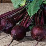 Beet Detroit Dark Red Organic