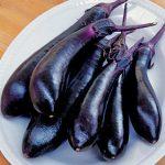 Eggplant Millionaire Hybrid