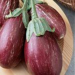 Eggplant Purple Rain Hybrid