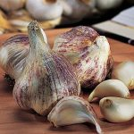 Garlic Early Italian