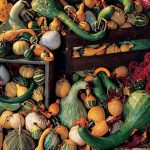 Gourd Ornamental Big Gourds Mix