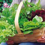 Lettuce Heatwave Blend