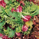 Mesclun Green Party Mix