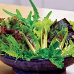 Mesclun Salad Fresh Cutting Mix