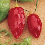 Pepper Hot Caribbean Red