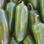Pepper Hot Jalapeno Gigante