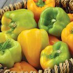 Pepper Sweet Flavorburst Hybrid