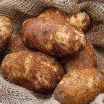 Potato Russet Norkotah