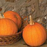 Pumpkin Spookie Organic