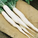 Radish Summer Cross Hybrid