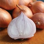 Shallots Holland Red