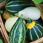 Gourd Ornamental Small Fancy Mix