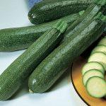 Squash Summer Burpee Hybrid Zucchini