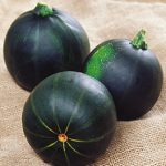 Squash Summer Eight Ball Zucchini
