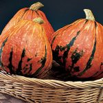 Squash Winter Lakota