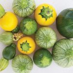 Squash Zucchini Ball Hybrid Mix