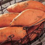 Sweet Potato Centennial