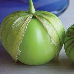 Tomatillo Gigante