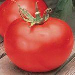 Tomato Better Boy Hybrid