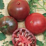 Tomato Black Krim Heirloom Organic