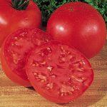 Tomato Burpee's Big Boy Hybrid
