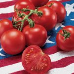 Tomato Fourth Of July Hybrid