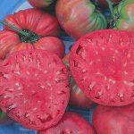 Tomato Giant Pink Belgium