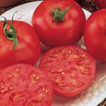 Tomato Red October Hybrid