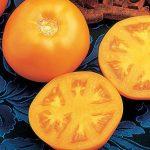 Tomato Sweet Tangerine Hybrid