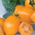 Tomato Tangerine Mama Hybrid
