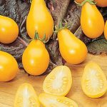 Tomato Yellow Pear Organic