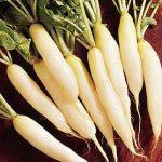 Radish White Icicle