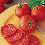 Tomato Druzba