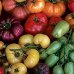 Tomato Rainbow Blend Heirloom