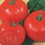 Tomato Super Beefsteak