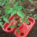 Tomato & Pepper Automator Trays