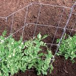 Pea And Cucumber Fence 2/Pack