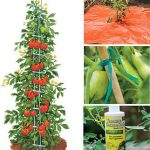 Ultimate Tomato Growers Kit