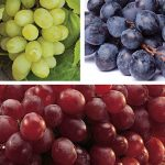 Seedless Grape Collection