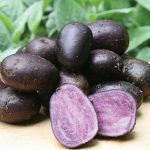Potato Purple Majesty