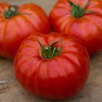 Tomato Heritage Hybrid