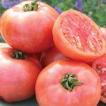 Tomato Pink Pounder Hybrid