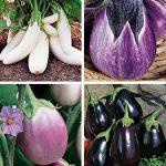 Eggplant Gourmet Blend