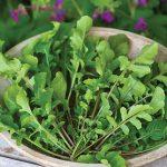 Arugula Selvatica Organic
