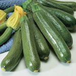 Squash Summer Burpee Fordhook Zucchini Organic