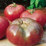 Tomato Cherokee Purple Heirloom Organic