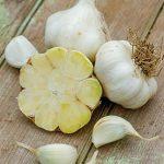 Garlic Transylvania
